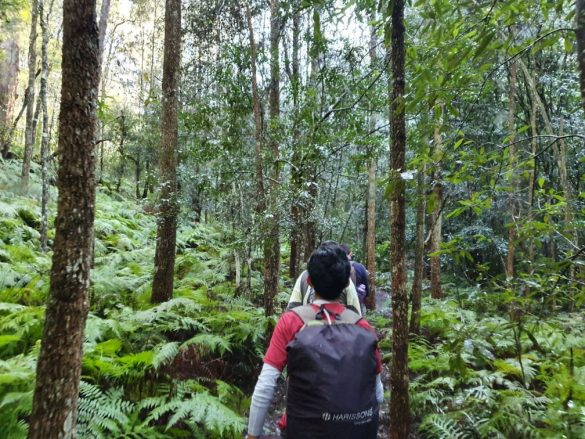 Mount Kuring-gai to Hornsby