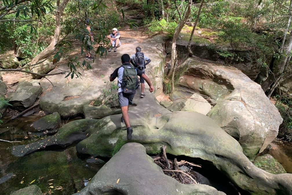 Hornsby to Chatswood via Lane Cove NP (28km)